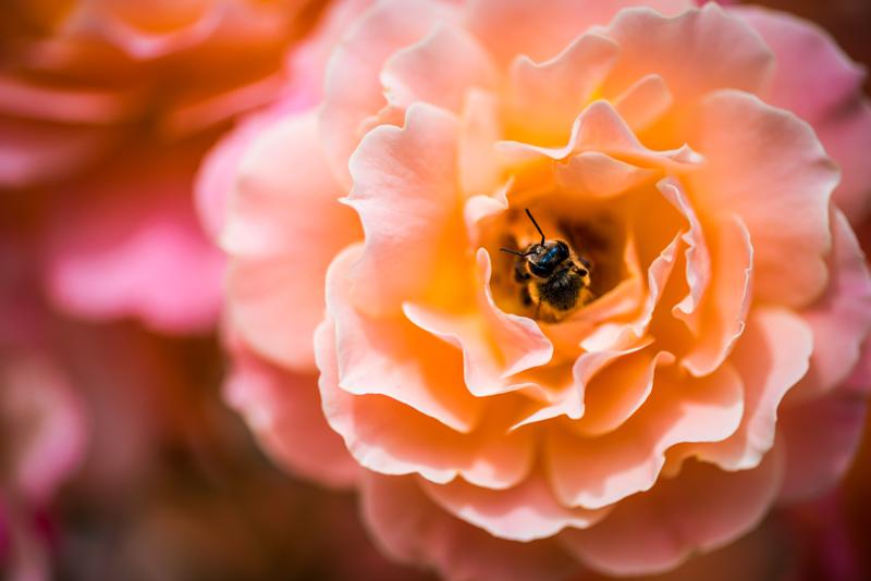 77mm Close-up +3 Filter