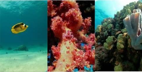 Kit Carcasa submarina SeaShell para Smartphones + Antorcha Subacuática