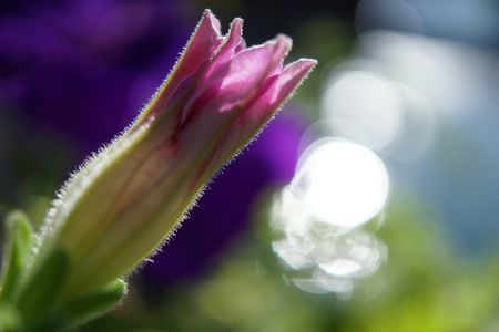Sony 30mm f/3.5 Macro Lens Sony E