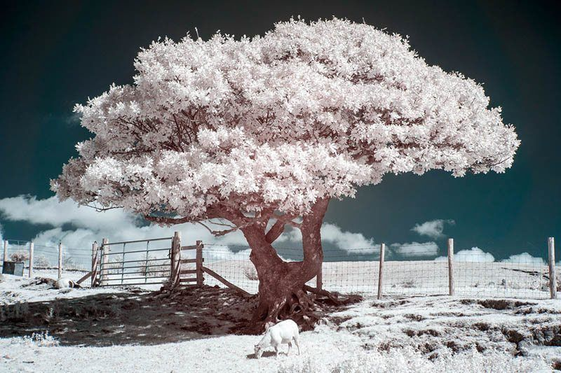 Infrared Filter 67mm 850nm